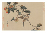 Bird Perched on a Branch from a Fruit Persimmon Tree. Art by Keibun Matsumura