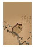 Owl of Branch Posters