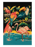 Tropical Hobbyland - Birds Posters