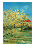 Orchard with Cypress by Van Gogh Premium Giclee Print by Vincent van Gogh