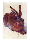 Field Hare Posters by Albrecht Durer