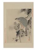 Hawk Prints