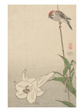 Small Bird on Lily Plant. Prints by  Baison