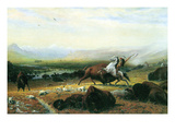 The Last Buffalo Prints by Albert Bierstadt