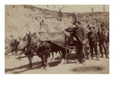 Gold Fever. Prospectors Going to the New Gold Field Prints by John C.H. Grabill