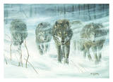 Wolfpack In Snowstorm Art by Don Li-Leger