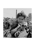 Portrait of a Migratory Boy Picking Hops Posters by Dorothea Lange
