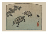 Turtles (Kame) Print by Ando Hiroshige