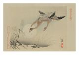 Flying Cranes Plakaty