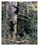 Famille d'ours noirs Affiche par Andrew Kiss