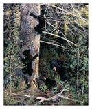 Black Bear Family Print by Andrew Kiss