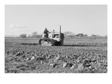 Cultivating Potato Field Plakat af Dorothea Lange