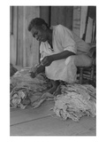 Black Sharecropper Sorts Tobacco Leaves Art by Dorothea Lange