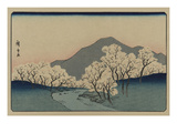 A Grove of Cherry Trees (Sakura Namiki Zu) Prints by Ando Hiroshige