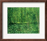 Woods and Undergrowth, c.1887 Framed Giclee Print by Vincent van Gogh