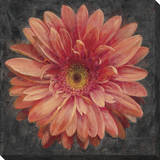 Vivid Floral 2: Gerbera Daisy Stretched Canvas Print