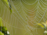 Spider Web in Dew Photographic Print by Lynn M. Stone