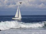 Sailboat on Monterey Bay, California Fotografisk trykk av Lynn M. Stone