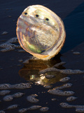 Abalone Shell on California Beach at Dawn Photographic Print by Lynn M. Stone