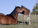 Wild Horse Mare with Foal, Wyoming Photographic Print by Lynn M. Stone
