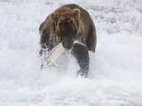 Grizzly Bear with Salmon, Alaska Photographic Print by Lynn M. Stone