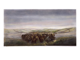 Buffalo Herd, 1862 Giclee Print by William Jacob Hays