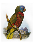 St Lucia Amazon Parrot Giclee Print by William T. Cooper