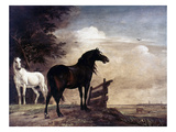 Potter: Horses, 1649 Giclee Print by Paul Potter