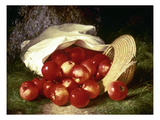 Dunning: Apples, 1869 Giclee Print by Robert Spear Dunning