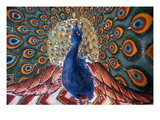 India: Peacock Giclee Print