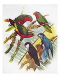 Group of Lorys Giclee Print by William T. Cooper