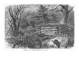 Trapping Wild Turkeys, 1868 Giclee Print by Alfred A. Maud