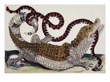 Crocodile and Snake Giclee Print by Maria Sibylla Merian