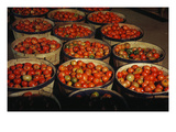 Puerto Rico: Tomatoes Prints by Jack Delano
