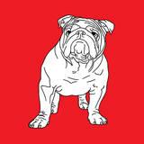 British Bulldog Art by Anna Nyberg