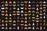 Pachanga Moths from Ecuador Prints by Belen Mena