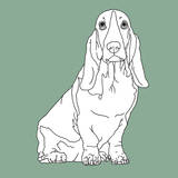 Basset Hound Prints by Anna Nyberg