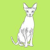 Spynx Cat Art by Anna Nyberg