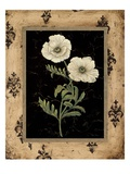 Silver Poppy Prints by  Regina-Andrew Design