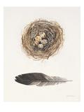 Field Study Nest Print by Jurgen Gottschlag