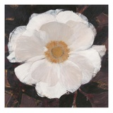 Magical White Cosmos Giclee Print by Ivo