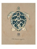 Vintage Linen Tortoise Giclee Print by Regina-Andrew Design 