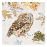 Eurasian Owl Posters by Chad Barrett