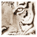 Tiger Pattern Prints by Frank & Susann Parker
