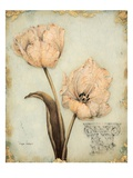 Tulip Recollection Premium Giclee Print by  Regina-Andrew Design