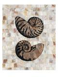 Pearlized Nautilus Print by  Regina-Andrew Design