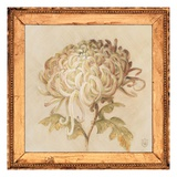 Chrysanthemum Floret Detail Prints by Lauren Hamilton