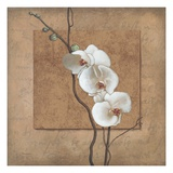 Golden Orchid I Prints by Lee Carlson