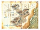 Nature's Tidepoolers Premium Giclee Print by Mary Escobedo