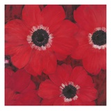 Triple Red Anemone Giclee Print by Ivo
